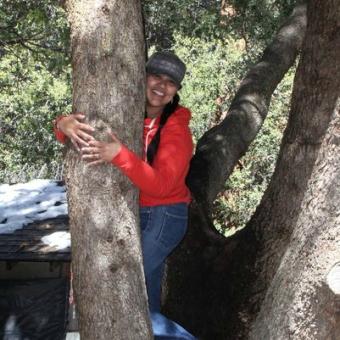 brenda tree 401x401